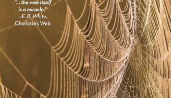 The Wonder of Spiderwebs