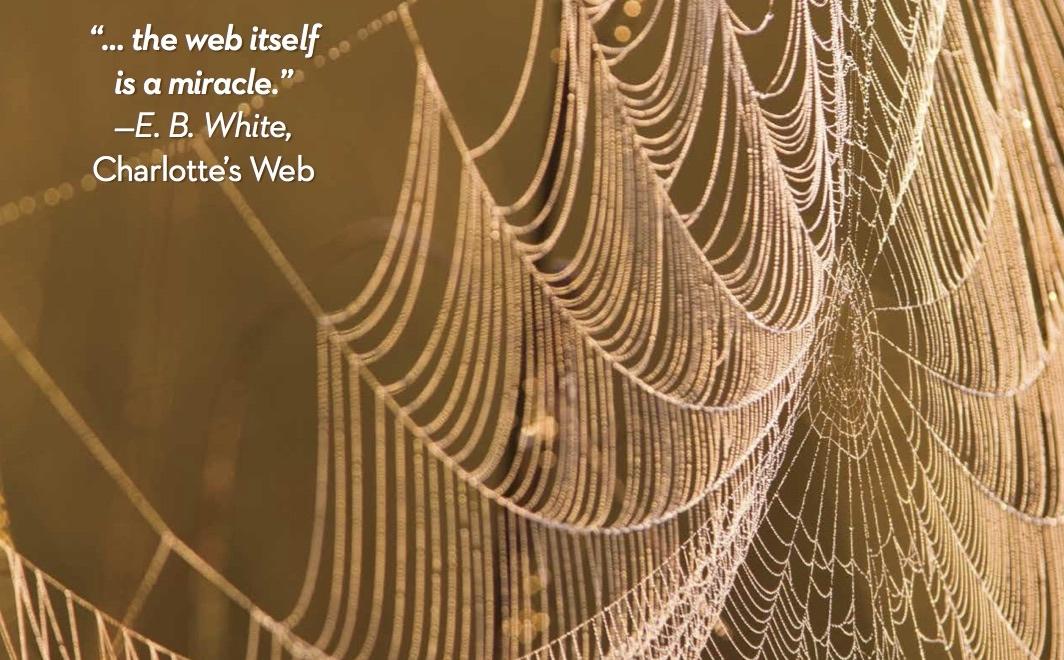 The Wonder of Spiderwebs